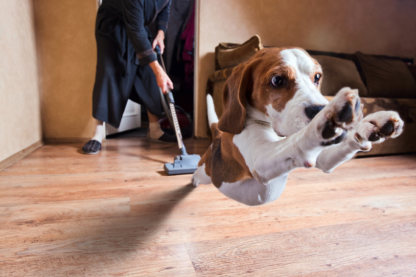 Best Vacuum Cleaners for Pet Hair (2018 Reviews & Guide)
