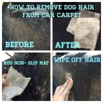 A Guide on How to Get Dog Hair Out of Carpet?