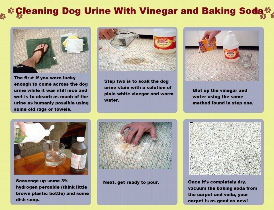 How To Clean Dog Urine From Carpet With Vinegar And Baking