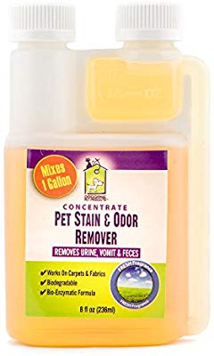 best-enzyme-cleaner-for-dog-pee