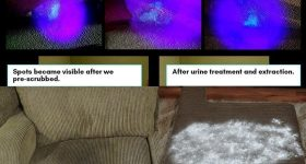 how-to-get-cat-pee-smell-out-of-couch