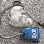 best-vacuum-for-shag-carpet-and-pet-hair