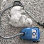 best-vacuum-for-shag-carpet-and-pet-hair