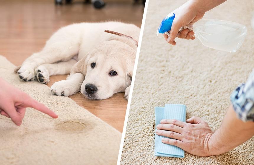 homemade-carpet-cleaner-for-pet-urine
